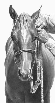 Pencil Portrait Taking It Well by Mary Ross Buchholz Graphite Horse Pencil Drawing, Horse Drawings, Pencil Art Drawings, Animal Drawings, Horse Sketch, Horse Artwork, Graphite Drawings, Charcoal Drawings, Cowboy Art