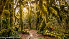 hall-of-mosses-trail-olympic-peninsula-photo-frame-from-relaxation-video- hoh-rain-forest.jpg (3840×2160)