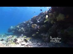 Dive The Florida Keys, Key West, Western Sambo Reef