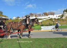 Part II: Mackinac Island, Michigan – Dog-friendly Horse-drawn Experience Mackinac Island Michigan, Northern Michigan, Horse Drawn, Trail Riding, Grand Hotel, Dog Friends, State Parks, Horses