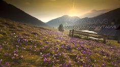 Timelapse 4 seasons in Tatra Mountains  Locations: Polana Chochołowska, Kasprowy Wierch, Gubałwka, Zakopane