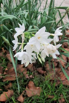 """Narcissus: """"Go, get thee hence:  Hadst thou Narcissus in thy face, to me Thou wouldst appear most ugly."""" Antony and Cleopatra [II, 5]"""
