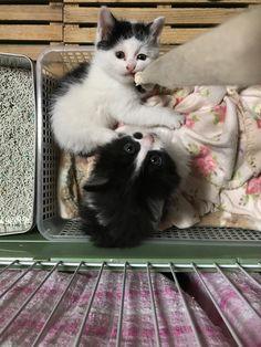 保護した子猫たち。