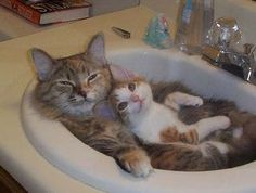Cat and kitten relaxing in the sink; pure contentment:)