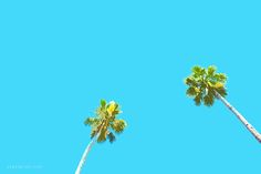Palm trees art picture