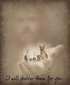 God loves our fur babies! He wouldn't let them just cease to exist; Animals do have a soul, and we'll see them again in heaven. I Love Dogs, Puppy Love, Animals And Pets, Cute Animals, Pet Loss Grief, Pet Remembrance, Tier Fotos, Rainbow Bridge, Pet Memorials
