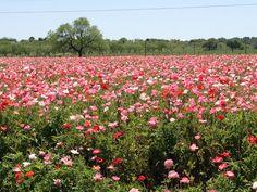 flowers online el paso tx