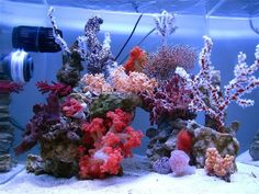 DSPS tank from Thailand gallon+) - Beautiful soft coral reef attached to the main 1000 g tank Saltwater Fish Tanks, Saltwater Aquarium, Aquarium Fish Tank, Fish Aquariums, Coral Reef Aquarium, Marine Aquarium, Nano Reef Tank, Reef Tanks, Reef Aquascaping