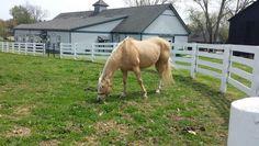 KY Horse Park