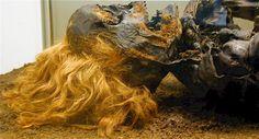 Neu Versen Man: Bog Bodies @ Mummy Tombs Bog Body, Archaeology, Lion Sculpture, Bodies, Lost, Events, History