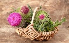 Milk Thistle and Liver Health  In addition to utilizing milk thistle for cancer prevention, anyone living in our toxic environment may want ...