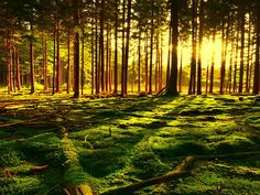 50 Magical Forest Photos from All Over the World – Photoshop and photography galleries Beautiful Nature Scenes, Beautiful World, Beautiful Places, Beautiful Landscapes, Jean Ferrat, Pays Francophone, Louis Aragon, Landscape Photography, Nature Photography