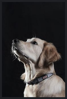 This looks so much like Shiloh it's scary! Even the very same collar...same color! @Todd Perry Perry Schnick
