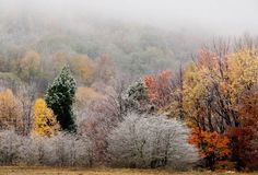 Fall to Winter Transition Evokes Diverse Emotions    canaan Autumn Painting, What Do You See, Outdoor Stuff, Photo Online, Time Of The Year, Photography Website, Cream White, West Virginia, Tattoo Ideas