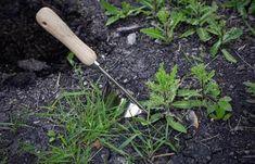 Absolutní zabiják plevele v zahradě: Domácí zázrak za pár korun zničí i nejodolnější plevel - 1 zalití a máte klid od plevele na celý rok! | iRecept.cz Garden Tools, Yard Tools, Outdoor Power Equipment