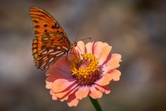 Gulf Fritillary Butterfly At Garden Gate by Stuart Schaefer on 500px