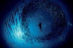David Doubilet sopra e sotto il mare   Fotografia