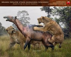 Smilodon populator attacks Macrauchenia by RomanYevseyev.deviantart.com