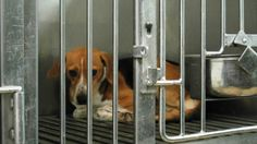Dogs need your help! Tell Congress to stop cruel taxpayer-funded experiments