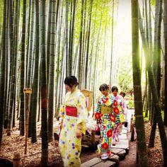 Bamboo grove in Hokokuji Temple Kamakura www.couchflyer.com #culture #nature #travel #buddha #instagood #bestoftheday