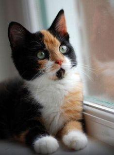 loveablecats: www.westvet.net