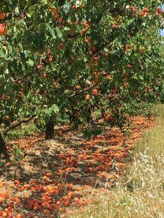 A spingere il carrello della spesa è l'aumento del 9,7% dei prezzi al dettaglio della frutta e del 7,7% dei vegetali freschi rispetto allo stesso mese dello scorso anno ma nelle campagne...