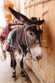 Een ezel in de straten van Fes, Marokko