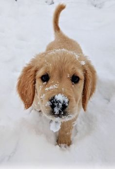 Most up-to-date Photo dogs and puppies labrador Ideas Complete you like your pet dog? Good doggy attention and also teaching will Super Cute Puppies, Baby Animals Super Cute, Cute Baby Dogs, Cute Little Puppies, Cute Dogs And Puppies, Cute Little Animals, Cute Funny Animals, Doggies, Cute Dogs And Cats