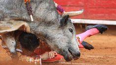 El Parlamento Europeo aprueba que el dinero de la UE no pueda usarse para ayudar a la tauromaquia