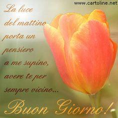 Buon+giorno+con+un+fiore