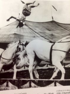 May Wirth somersaulting from galloping horse to galloping horse.
