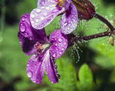 Flower Drops 2 by Mackingster.deviantart.com on @DeviantArt