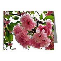 Pink Blooms Note Cards