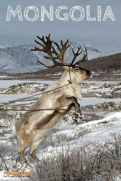 Be ready to discover the Tsaachins, a Reindeer Family. This mythic ethnic will welcome you in their home place near the Khuvsgul Lake, Mongolia  | Traveldudes Social Travel Blog & Community