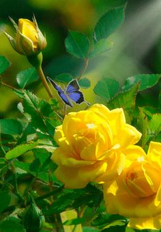 All Gifs - Community - You're are Welcome Beautiful Flowers Wallpapers, Beautiful Rose Flowers, Beautiful Gif, Flowers Nature, Exotic Flowers, Amazing Flowers, Pretty Flowers, Lavender Roses, Yellow Flowers