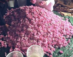 Taif rose factory