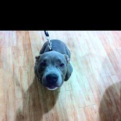 Cash Dog Classes, Happy, Dogs, Animals, Animales, Animaux, Pet Dogs, Ser Feliz, Doggies