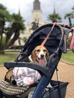 Baby Beagle, Beagle Puppies, Beagles, Pet Dogs, Beautiful Creatures, Cute Pictures, Life Is Good, Baby Strollers, Ms