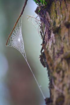 spiderweb   *g