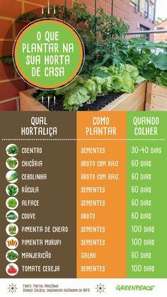 Eco Garden, Home Garden Plants, Home Vegetable Garden, Garden Care, Garden Crafts, Garden Paths, Green Life, Botany, Beautiful Gardens