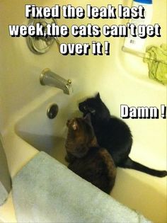 20 Hilarious Animal Pictures