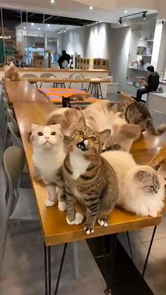 Funny Cute Cats, Cute Cat Gif, Cute Cats And Kittens, Cute Funny Animals, Kittens Cutest, Cute Animal Videos, Funny Animal Pictures, Funny Images, Cute Little Animals