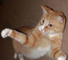 Cat Scout Secret Paw Clasp