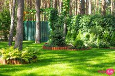 19 roślin, które będą rosły w zacienionych miejscach! - Twoje DIY Bonsai, Diy And Crafts, Pergola, Arch, Outdoor Structures, Plants, Gardening, Longbow, Outdoor Pergola