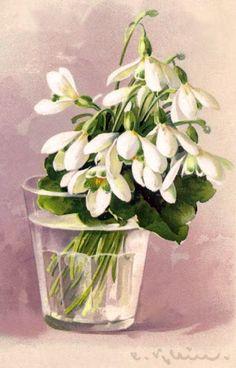 'Snowdrops' Catherina Klein