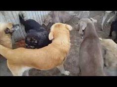 Libertad animal en armonía y alegría   ANIMAL HELP URUGUAY
