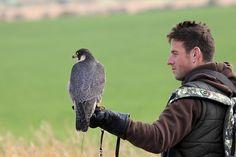 Czech-Falconry-Birds-Hunting-Bohemian-Photo-110
