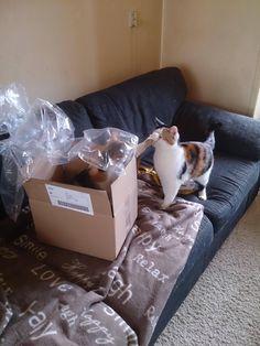 No. This box is mine. - Imgur