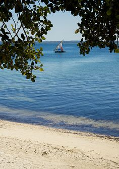 ˚Dhow Sailing, Island Of Mozambique, Mozambique