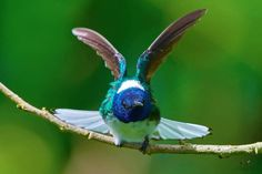 Flying Jewels, God`s Awesome & Gorgeous Creation. Emily Dickinson, Feathers, Jewels, God, Awesome, Animals, Dios, Animales, Bijoux